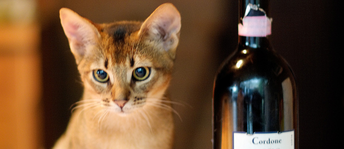 There Is Now a Non-Alcoholic Wine Made for Cats