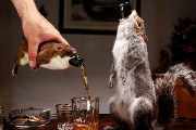 Craft Beer New York City | BrewDog is Releasing a $20,000 Beer Stuffed in a Taxidermied Squirrel | Drink NYC