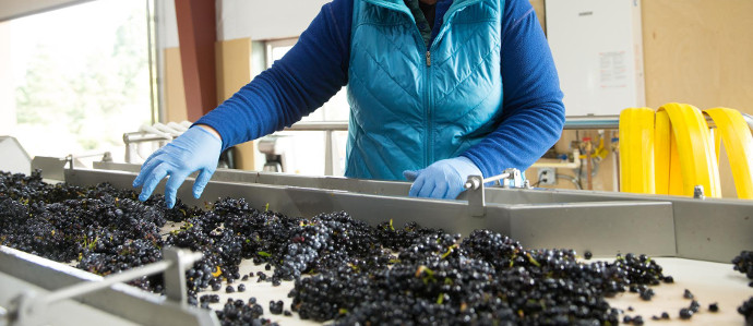 Nasty Woman Wines Launches in Oregon