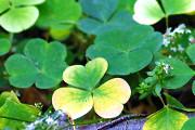 NYC's Best Irish Bars for Celebrating St. Patrick's Day 2016